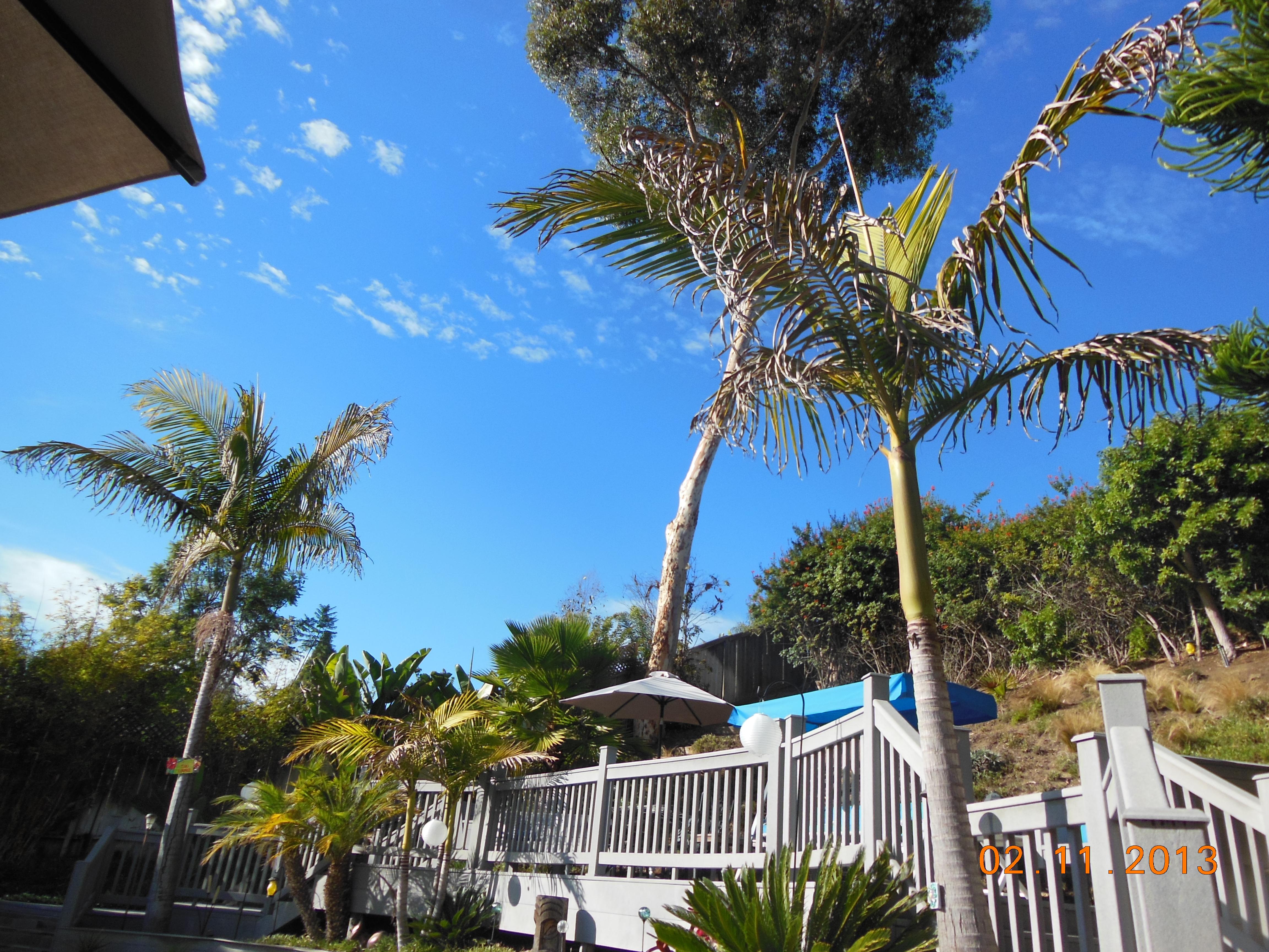 Tropical Backyard Paradise! Bring the pets. Pool, deck, spa, garden ...