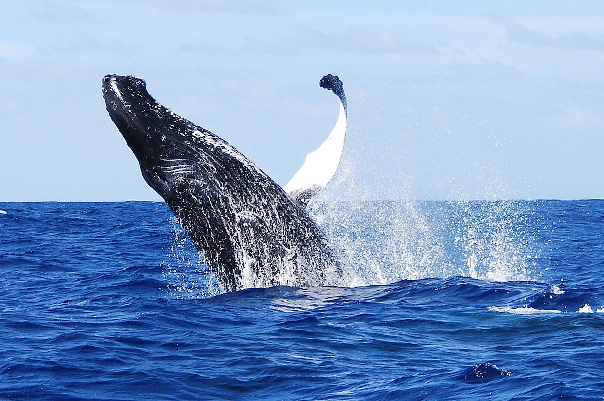 Whale watching... Découverte des Baleines