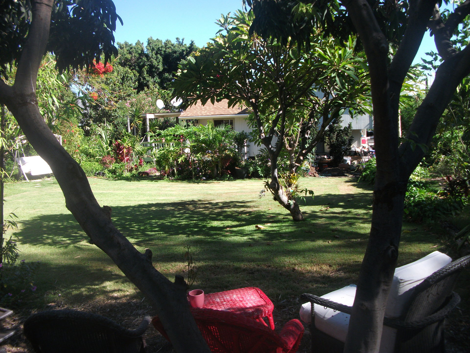 Relax Under Lychee Tree With All Day Shade ...