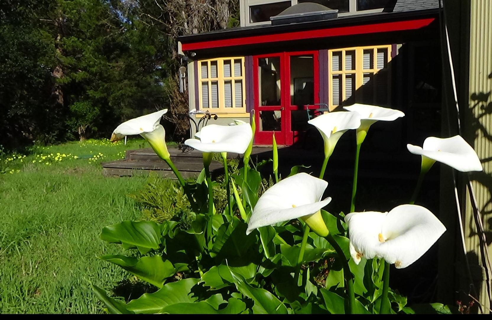 TIBETAN TEA HOUSE IN BANANA BELT. Charming Country Village Near SF ...